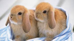 rabbit bunny ultimate a and bunny rabbit compilation 2016