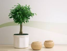 plante verte chambre à coucher exceptionnel plante verte chambre a coucher 5 salle plantes et
