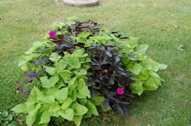 susiej my secret veggie garden edible plants for your front yard