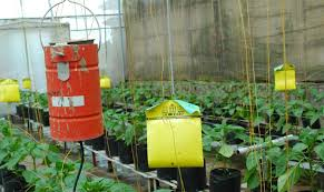 cara membuat cairan hidroponik cara membuat nutrisi hidroponik alami belajar berkebun