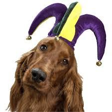 mardi gras jester ribbon dog jolly jester hat pet costume jester hat pet costumes and mardi