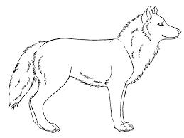 gallery how to draw a simple wolf drawing art gallery