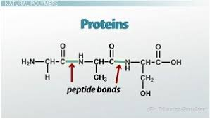 introduction to organic molecules ii monomers and polymers