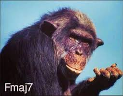 Chimp Meme - name that chord chimp i m a guitarist get me out of here
