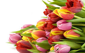 get better soon flowers get well soon flowers same day flower delivery