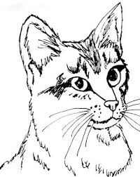 gray tabby cat coloring coloring