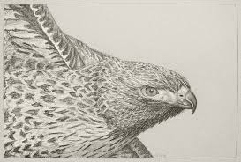 draw a bird day u2013 hawk u2013 myr u0027s bytes