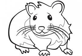 Coloriage Hamster pour enfant dessin gratuit à imprimer