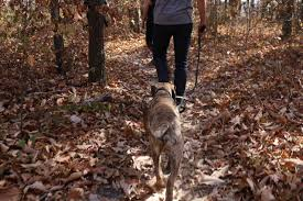 7 dog friendly hikes in the chattanooga area