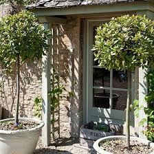25 best ideas about paul tagliabue on trees in pots