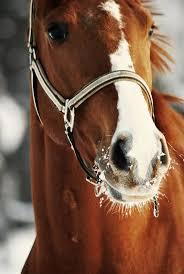 ferrari horse vs mustang horse 498 best horse and donkeys images on pinterest donkeys horses