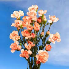 bulk carnations 400 bulk yellow carnations this is where i will get my carnations