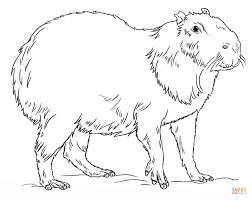 capybara the largest rodent in the world coloring page free