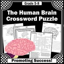 the human brain science crossword puzzle human body systems