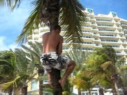 coconut tree climbers in miami