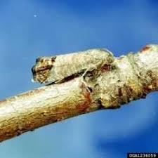 what u0027s that worm in my apple dave u0027s garden