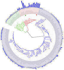 file tree of with genome size svg wikimedia commons