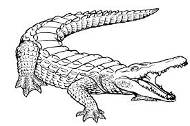 printable alligator coloring pages kids gekimoe u2022 52431