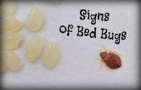 Remedy For Bed Bug Bites 4 Signs Of Bed Bugs And A Remedy For Bug Bites Hopingfor Blog