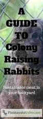 Raising Meat Chickens Your Backyard by A Thorough Guide To Raising Rabbits In A Colony Meat Rabbit Colony