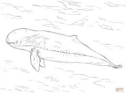 irrawaddy dolphin coloring page free printable coloring pages