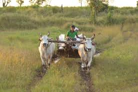 indian cart file indian bullock cart jpg wikimedia commons