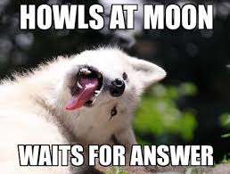 Moon Moon Memes - moon moon the dumb history of the dumbest dog meme