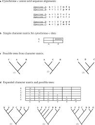 evolution u0026 phylogenetic analysis classroom activities for