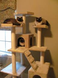 interesting cat tree house plans pictures best inspiration home