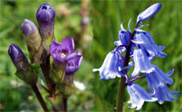 Blue And Purple Flowers Western Isles Wildflowers Arranged By Colour Flowers Of The
