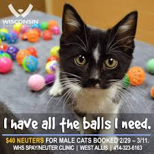9 spay neuter promos that will make you lol aspcapro
