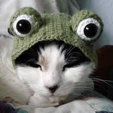 Funny Halloween Costumes Cats 86 Knitted U0026 Crocheted Cat Images Cats