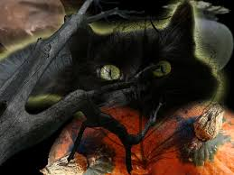 cat halloween wallpaper free download halloween wallpapers to make your pc more halloween