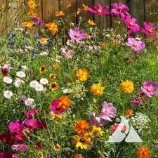 seeds for unusual cut flower arrangement plantss