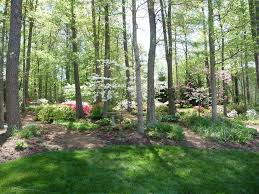 tree planting ideas landscape traditional with flower beds