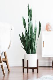 plant stand plant shelves ladder best indoor decor ideas on