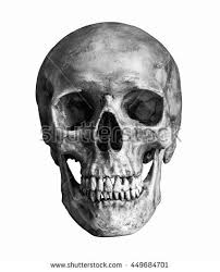black white human skull isolated on stock photo 449684701