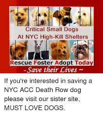 Memes Nyc - critical small dogs at nyc high kill shelters rescue foster adopt