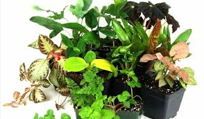 plant indoor house plants outstanding tropical houseplants