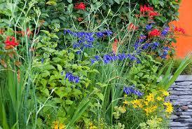 flower garden mixed perennials and annuals plant u0026 flower stock