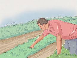 How To Cut Weeds In Backyard How To Clear Underbrush With Pictures Wikihow