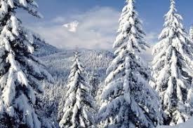 snowy trees 923213 walldevil