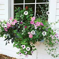 Container Flower Gardening Ideas A Gallery Of Beautiful Container Garden Ideas