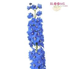 delphinium flower wholesale delphinium delphinium flowers for diy weddings