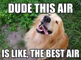 Golden Retriever Meme - 25 charming golden retriever memes sayingimages com