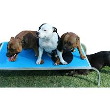 virtually indestructible dog trampoline beds