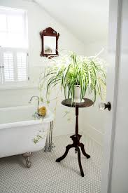 window table for plants captivating spider bathroom plants decor on high wooden table inside