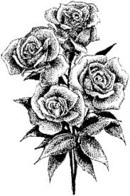 rose drawings in pencil expressive rose sketch blossoming art