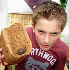 Lizard Toast Meme - schoolboy 10 finds reptile in tesco loaf of bread daily mail