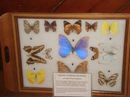 insects at home and abroad at oxford history museum